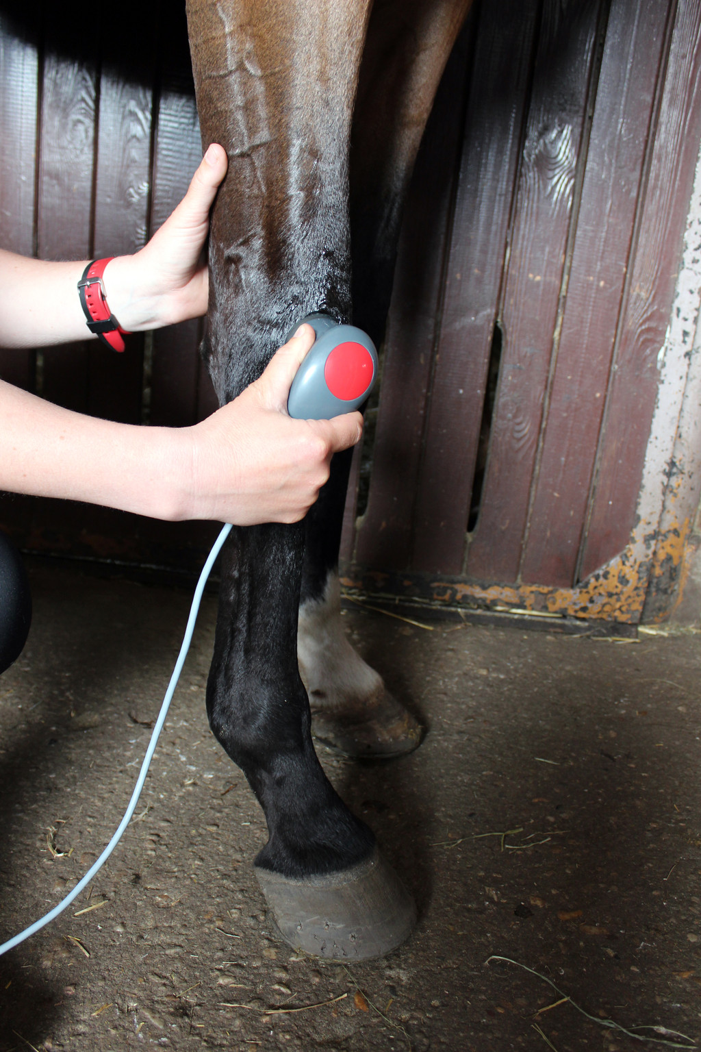 horse joint mobility limitations