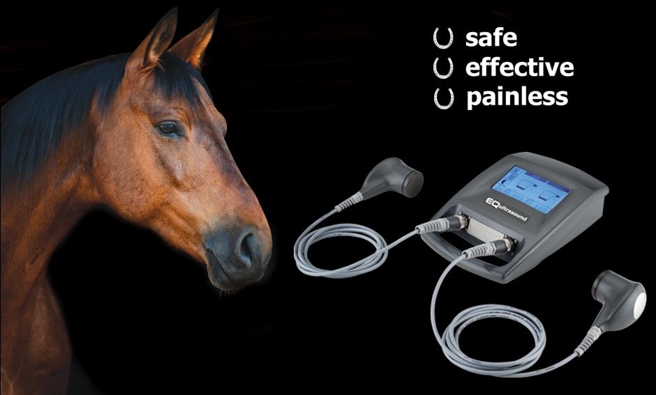 Sound Wave Therapy For Horses