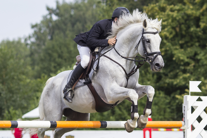 equine ultrasound show jumping horse