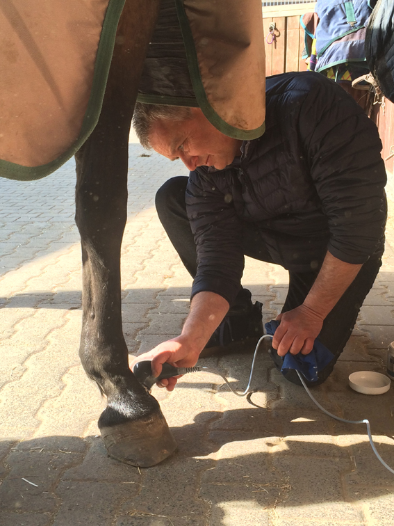 therapeutic ultrasound for horses